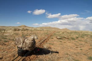 Robotic female sage-grouse