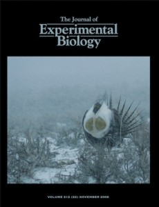 My sage-grouse photo on the cover of J Exp Bio issue with our paper